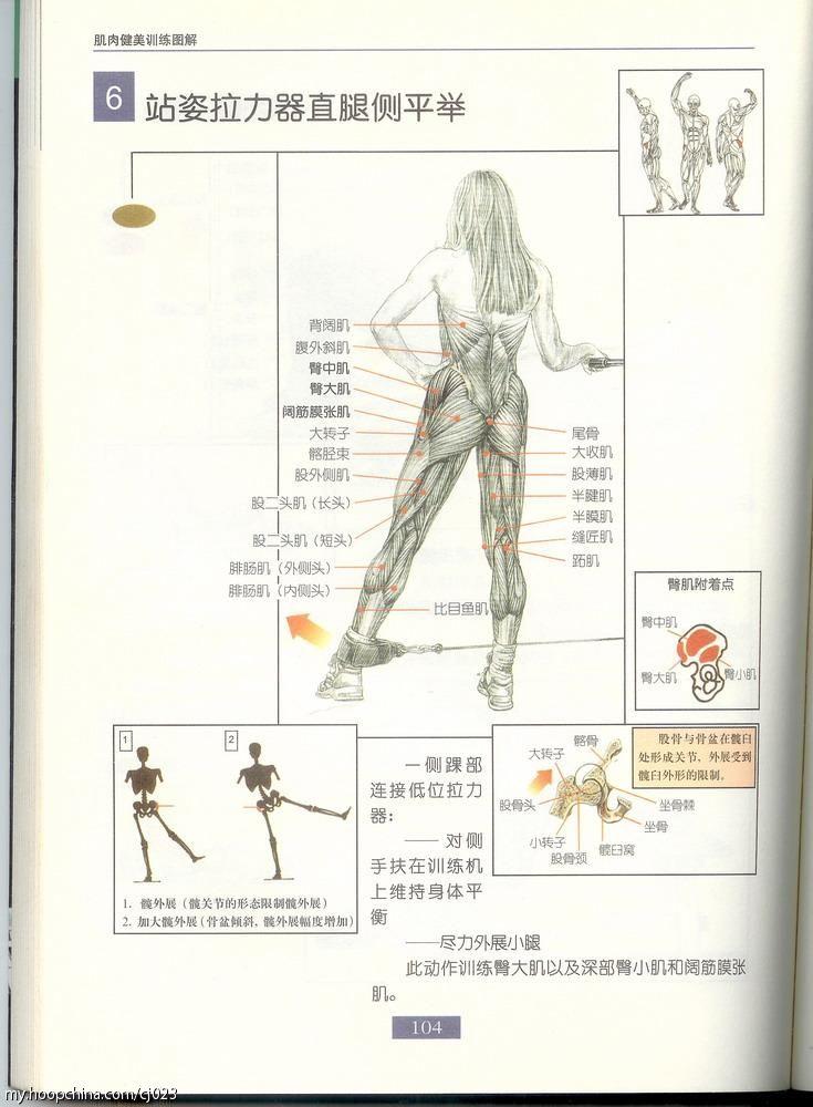 臀中肌和臀小肌的定位图片_臀大肌臀中肌定位图解 臀中肌臀小肌定位图图片