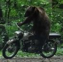 黑色大熊精