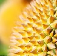 榴莲带壳吃